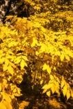 Hojas coloreadas brillantes en un árbol imagen de archivo
