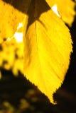 Hojas coloreadas brillantes en un árbol fotos de archivo libres de regalías