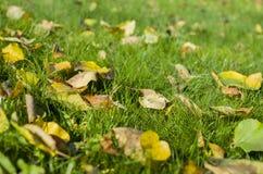 Hojas coloreadas en la hierba Fotografía de archivo