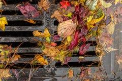 Hojas coloreadas multi que estorban un dren de la calle Fotografía de archivo libre de regalías