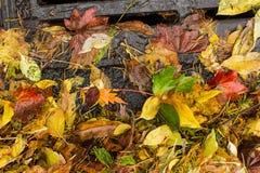 Hojas coloreadas multi que estorban un dren de la calle Imagen de archivo libre de regalías
