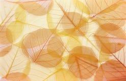 Hojas coloreadas secas Imagen de archivo