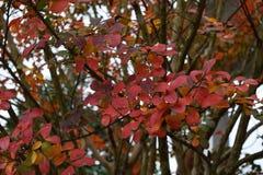 Hojas coloreadas vibrantes de la caída Imagen de archivo