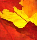 Hojas coloridas Fotos de archivo libres de regalías