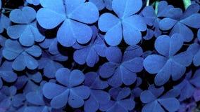Hojas coloridas Foto de archivo libre de regalías