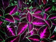 Hojas coloridas Fotografía de archivo libre de regalías