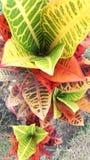 Hojas coloridas Fotos de archivo