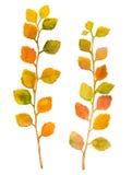 Hojas coloridas de la acuarela del otoño aisladas en el fondo blanco Imagen de archivo