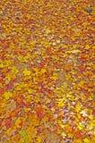 Hojas coloridas de la caída en Forest Floor Imagen de archivo