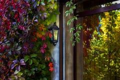 Hojas coloridas de la vid reflejadas en vidrio de la ventana Fotografía de archivo