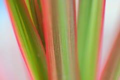Hojas coloridas de las plantas, fotografías macras Imagen de archivo
