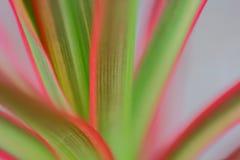 Hojas coloridas de las plantas, fotografías macras Foto de archivo libre de regalías