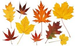 Hojas coloridas del árbol imagenes de archivo