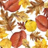 Hojas coloridas del fondo de la acuarela del otoño Fotografía de archivo