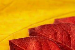 Hojas coloridas del otoño Imagen de archivo libre de regalías