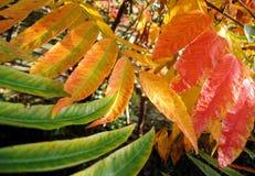 Hojas coloridas del otoño Fondo del otoño imagen de archivo