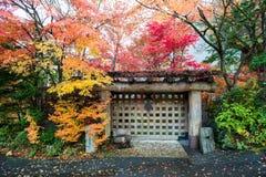 Hojas coloridas del árbol de arce del otoño de la puerta de madera Foto de archivo