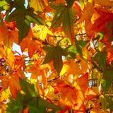Hojas coloridas en árbol Foto de archivo libre de regalías