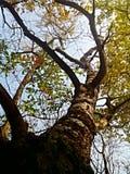 Hojas coloridas en árboles en sol del otoño imagen de archivo