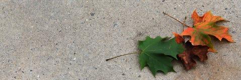 3 hojas coloridas en el estrecho de R Imagenes de archivo