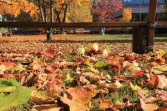 Hojas coloridas en el otoño en Basilea Imagenes de archivo