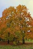 Hojas coloridas en el otoño en el parque Imagen de archivo
