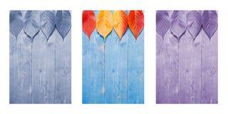 Hojas coloridas en fondo azul, de madera Tríptico en colores azules, de la púrpura y de la naturaleza Imagenes de archivo