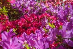 Hojas coloridas en Isabella Plantation Suitable para hacer im?genes de fondo fotografía de archivo