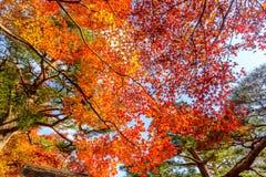 Hojas coloridas en la estación del otoño en Japón Imagenes de archivo