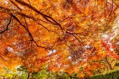 Hojas coloridas en la estación del otoño en Japón Fotografía de archivo libre de regalías