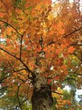 Hojas coloridas en otoño Foto de archivo libre de regalías