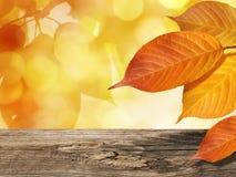 Hojas coloridas en otoño en fondo de oro de las hojas con la tabla de madera imágenes de archivo libres de regalías
