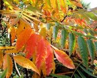 Hojas coloridas Fondo del otoño foto de archivo