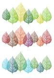 Hojas coloridas, sistema del vector Imagen de archivo libre de regalías