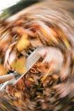 Hojas con barrido Imagen de archivo libre de regalías