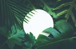 Hojas con el fondo del espacio de la copia Botánico tropical foto de archivo libre de regalías