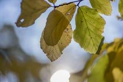 Hojas con el sol Fotografía de archivo libre de regalías