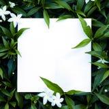 Hojas con la nota de la tarjeta de papel Fotos de archivo