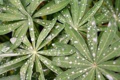 Hojas con las gotitas de la lluvia Fotos de archivo