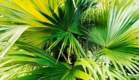 Hojas con las rayas verdes largas en la luz del sol brillante imagen de archivo libre de regalías