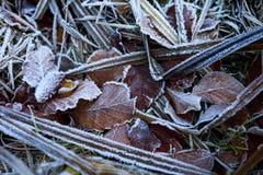 Hojas congeladas Foto de archivo libre de regalías