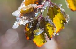 Hojas congeladas Fotografía de archivo libre de regalías
