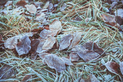Hojas congeladas Imágenes de archivo libres de regalías