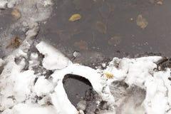 Hojas congeladas del abedul Imagen de archivo libre de regalías