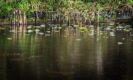 Hojas congeladas del río Fotos de archivo