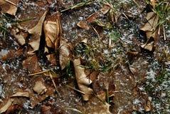 Hojas congeladas en un charco Imagen de archivo