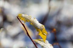 Hojas congeladas en una mañana del invierno Fotografía de archivo libre de regalías