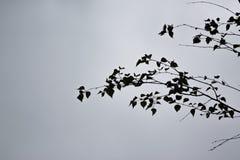Hojas contra el cielo Fotografía de archivo libre de regalías