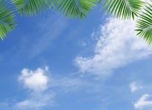 Hojas contra el cielo azul Imagen de archivo