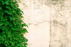 Hojas contra la pared Fotografía de archivo